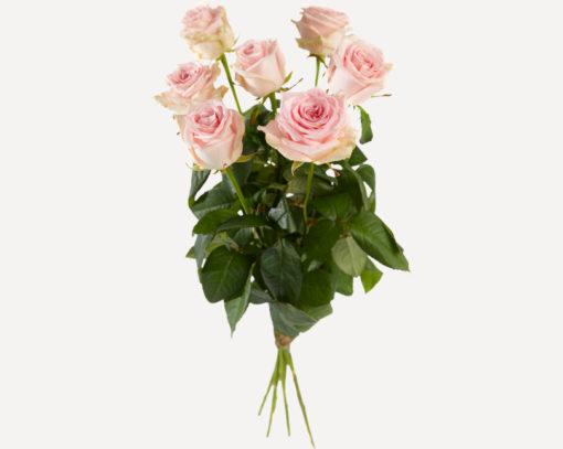 Roze rozen los